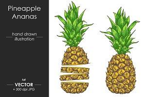 Vector pineapple illustration ananas