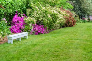 Landscaped garden scene with bench
