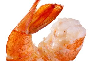 Shrimp isolated ona white background