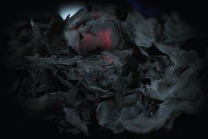 Black Rose Death