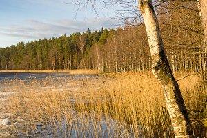 Spring nature lake