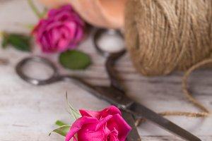 Pink roses with flower pot, rope with scissors