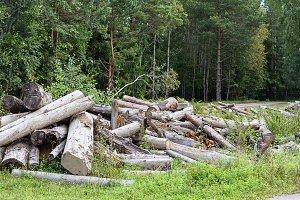 Deforesation