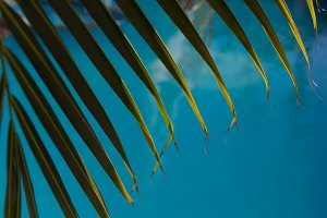 Water surface background and palm leave