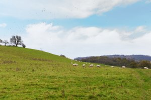 Perfect English sunny autumn landscape with sheep and birds around