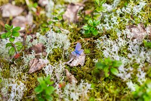 butterfly on a forest moss