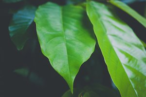 Green leaf texture background decoration - selective focus