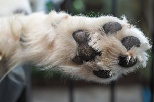 Close-up of mammal's paws and white hair