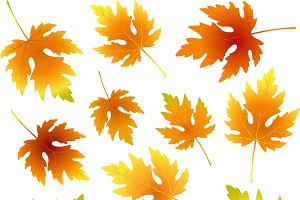 Fall maple leaves collection,pattern