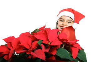 Little girl with poinsettia
