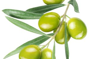 Olives on branch with leaves isolated on white. File contains a path to cut.
