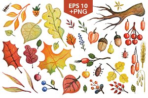 Vector autumn leaves,berries set