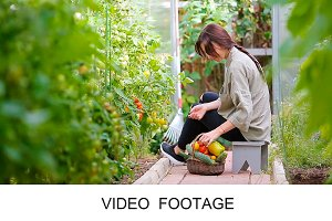 Woman harvest greenery in greenhouse