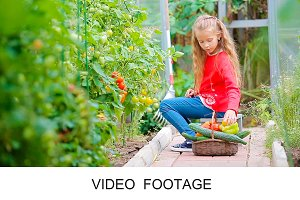 Girl collects cucumbers and tomatos