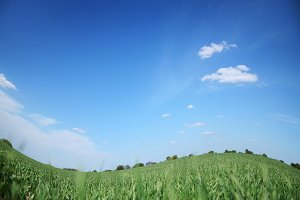 Green field and bly cloudless sky.