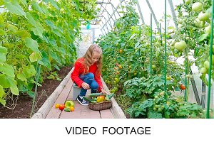 Cute girl picks pepers and tomatoes