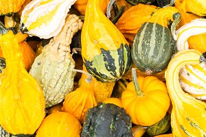 Decorative gourds in a display
