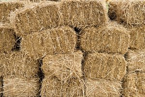 Hay bales in a large pile