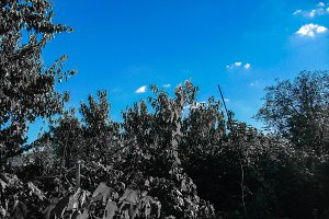 Colorless trees blue sky background