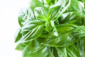 green basil isolated
