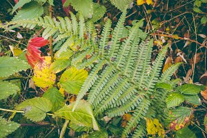 Fern Leaves in Autumn Forest