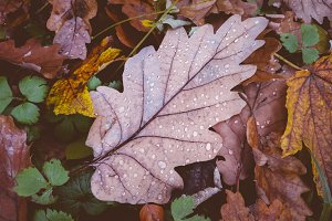 Wet Leaves on Forest Floor