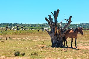 Horse near dry tree trunk.