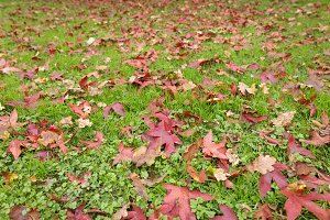 Autumn fall leaves on grass background