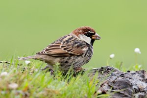 Delicate bird