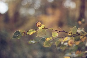 Leaf bough in fall