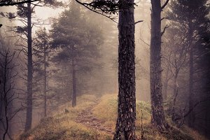 Dark and Gloomy Autumn Forest