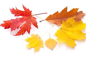 Autumn leaves on a white background.