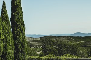 Vineyards of Napa Valley 9