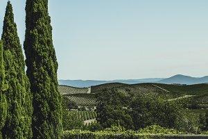 Vineyards of Napa Valley 9