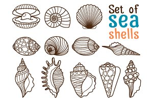 Set of sea shells