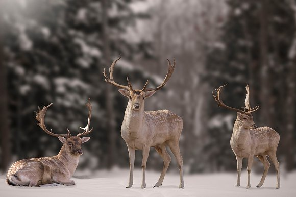 10  Christmas Deer PNG Overlays  Objects  Creative Market