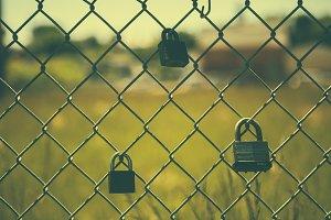 Padlocks on a Fence