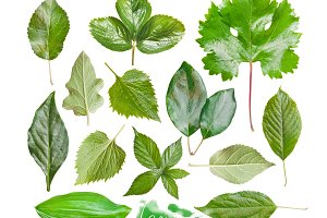 Green leaves set, isolated on white