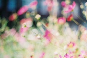 Pink flowers and soft bokeh