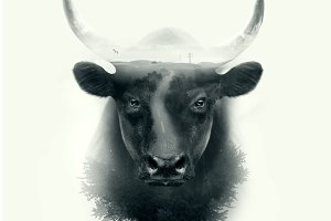 Bull head double exposure effect
