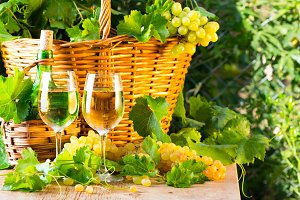 White wine bottle, two glasses, bunch of grapes in basket