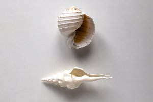 Shell. Top view