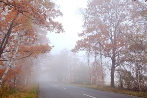 Forest road in a foggy autumn day.