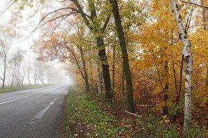 Foggy autumn countryside road.