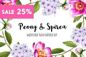 Peony & Spirea