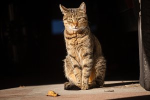 alley cat catches sun