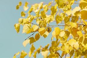 Birch autumn leaves in retro style