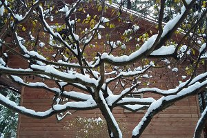 Patterns of winter