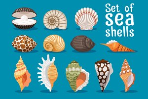 Sea shells set