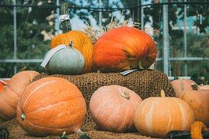 Several pumpkins of different colors